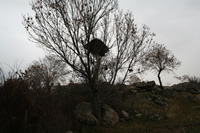 Taslica Village Photo Gallery 8 (Bird Nest) (Ankara, Kizilcahamam)