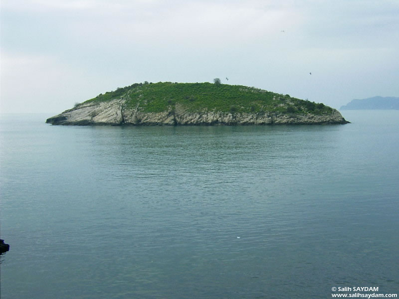 Rabbit Island Photo Gallery 1 (Bartin, Amasra)