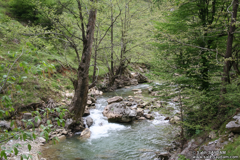 Ulukaya Photo Gallery 3 (Ulus Stream) (Bartin, Ulus)