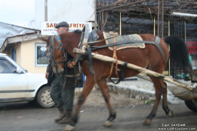 Horse Photo Gallery 1 (Usak, Banaz)