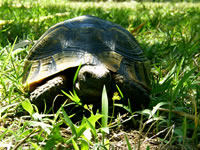 Turtle Photo Gallery 1