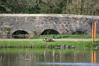 Canada Goose Photo Gallery 1 (Cardiff, Whales, United Kingdom)