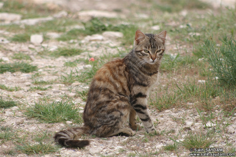 Cat Photo Gallery 8 (Mersin, Silifke, Uzuncaburc)
