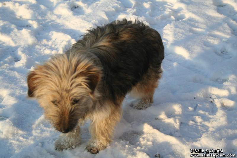 Dog Photo Gallery 4 (Ankara)