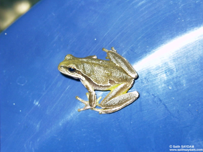 Frog Photo Gallery