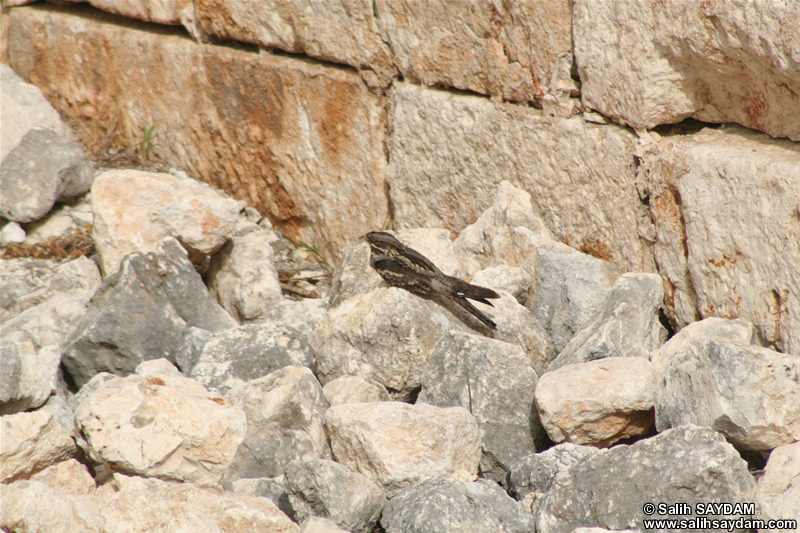 Bird Photo 2 (Mersin, Kizkalesi)