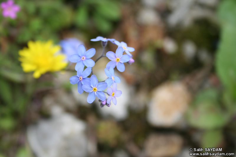 Bartin Flower Photo Gallery 4 (Ulukaya)