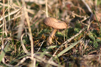 Mushroom Photo Gallery 2 (Ankara, Yakakaya Village)