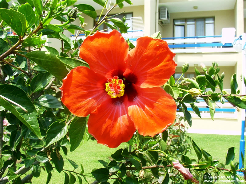 Mersin Flower Photo Gallery 1 (Yesilovacik)