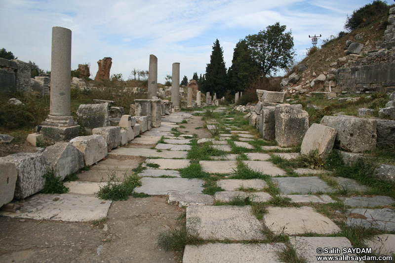 Ephesus Antique City Photo Gallery 7 (Selcuk, Izmir)