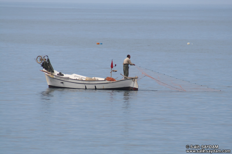 Akcaabat Photo Gallery 3 (Fisher) (Trabzon)