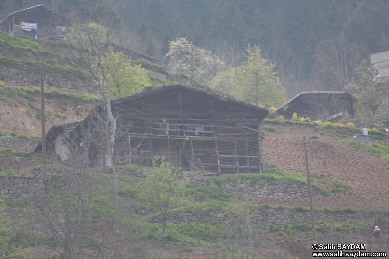 On Road between Trabzon and Uzungol (Long Lake) Photo Gallery (Trabzon)